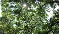 A luz do sol através das árvores