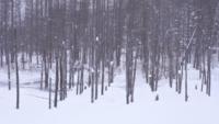 Estanque Azul Biei Hokkaido