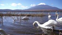 Fuji de montagne au Japon