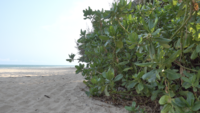 Vegetation On A Tropical Beach