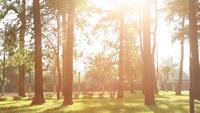 Puesta de sol en un parque de verano