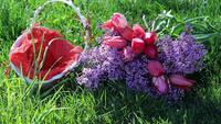 Cesta de lilas y tulipanes
