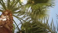 Palmen Gegen Einen Schönen Blauen Himmel