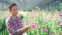 Agricultor asiático examinando flor