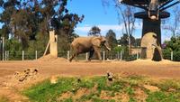 Elefant, der in Käfig am Zoo 4K geht