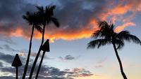 Vista de antorchas Tiki en Hawai 4K