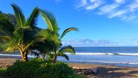 Palm Trees By The Ocean In Hawaii 4K