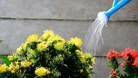 Regando las flores con una regadera de plástico