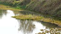 Superfície e vegetação da água do rio