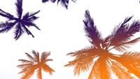 Gradient Color Coconut Trees