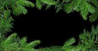 Green Branches Of Pine Tree Background