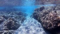 Snorkeling en el mar con una escuela de peces en 4K