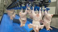 Raw Chicken Meat Production Line