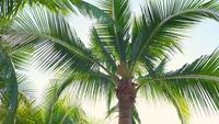 Palm tree leaves moving