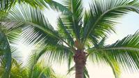 Hojas de palmera en movimiento