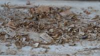 Holzspäne auf dem Rütteln des Bretterbodens