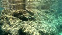 Visschool op rif 4K