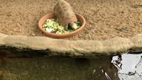Een grote schildpad die groenten in een kom eet