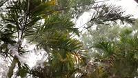 Regn som kör ner fönstret med naturbakgrund