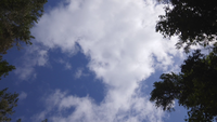 Track shot de ciel partiellement nuageux entre les arbres