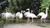 Gruppe von Flamingos im Teich