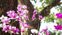 Shifted Focus Shot of Pink Orchids
