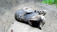 Gros plan, chat, dormir, plancher