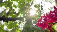 Orquídeas rosa delicadamente florescendo em exposição