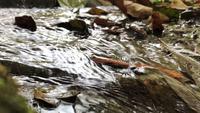 A água corre através do riacho pequeno.