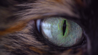 L'oeil de chat