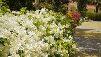 Summer Egypt garden