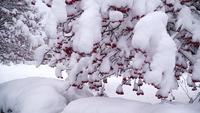 Winter viburnum boom met rode bessen bedekt met sneeuw