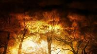 Dramático humo brillante en el bosque