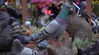 Troupeau de pigeons debout sur un sol en béton dans le parc