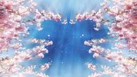 Loop de floração fundo cereja