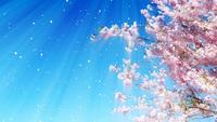 Cereza floreciente y pétalos que caen