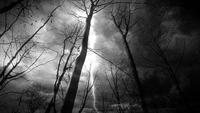 Floresta escura da fantasia durante a noite