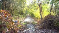 Hojas caídas en la antigua carretera de asfalto en el parque otoño
