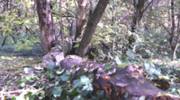 Gefallener Baum zwischen Blättern