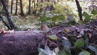 Flytta bort från ett fallet träd