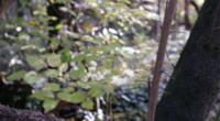 Árbol en el bosque