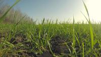 La vue d'un champ avec la lumière du soleil à partir d'un gros plan de feuilles