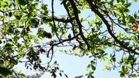 Une colombe perchée sur un grand arbre