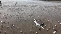 Zwerm meeuwen op het strand