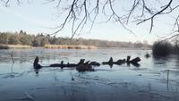 Een boomtak die in het ijs wordt bevroren