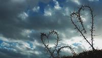 Plantas em forma de coração