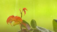 Lloviendo en las hojas