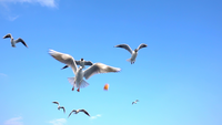 Seagulls Flying in Slow Motion