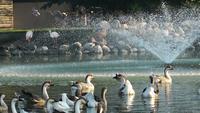 Vida de pájaros en el lago
