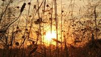 Pôr do sol no Prado de verão